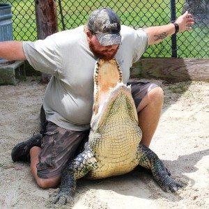 Wooten's Live Alligator Show