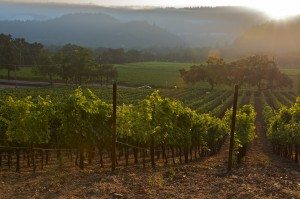 sunrise vineyards 2