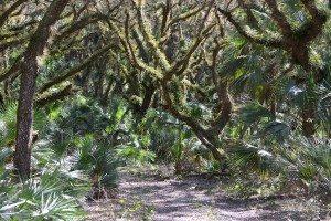 conservation-2020_daniels-preserve-at-spanish-creek