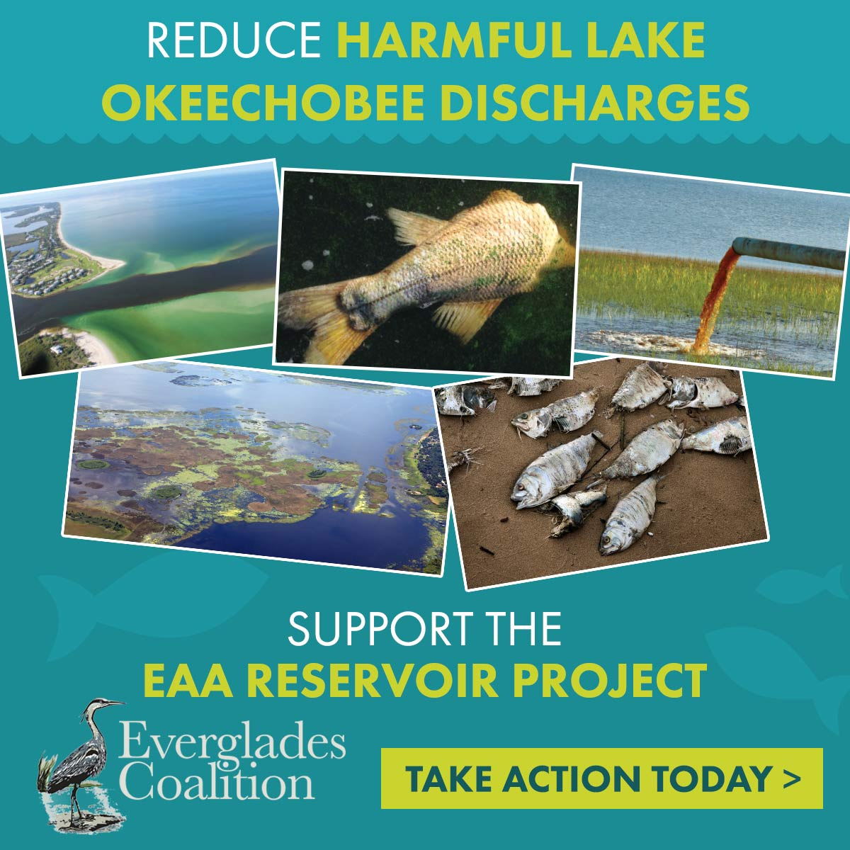 Campaign Protects Florida Waters