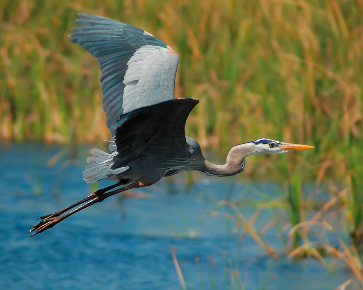 Client Events - Everglades photo